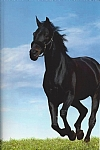 Journal/Notebook:  Black Horse Galloping Through a Meadow on a Perfect Day