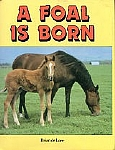 A Foal is Born - HB