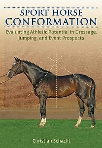 Sport Horse Conformation - HB