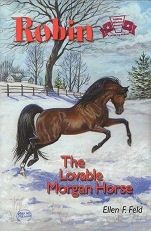 Robin, the Lovable Morgan Horse
